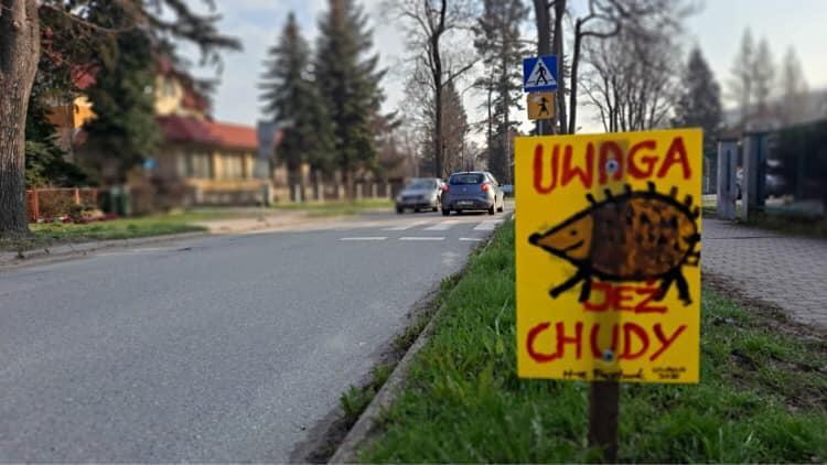 Uwaga na jeże! Polanica-Zdrój ratuje zwierzęta